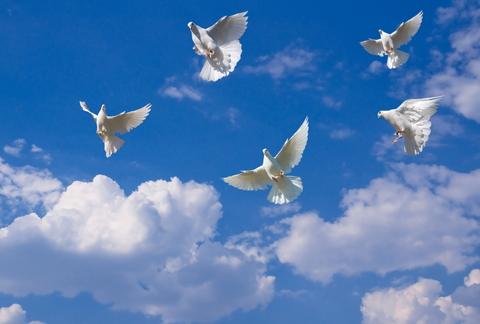 whiteflyingdoves